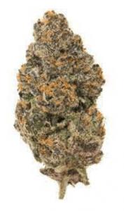 Biscotti Cannabis Strain