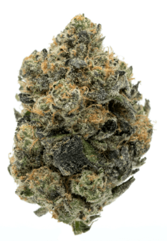 Girl Scout Cookies - Cannabis Strain