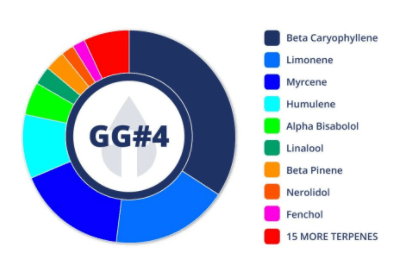 Gorilla Glue - Cannabis Strain Information