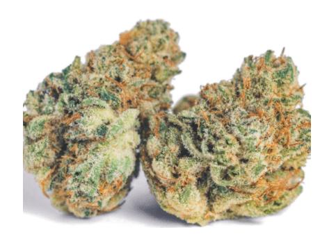 Gorilla Glue - Cannabis Strain