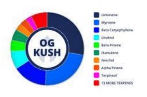 OG Kush Cannabis Strain Details