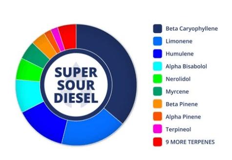 Sour Diesel Cannabis Information