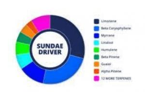 Sundae Driver Cannabis Strain Information