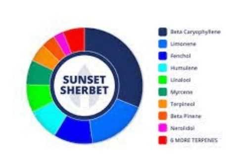 Sunset Sherbet - Cannabis Strain Information