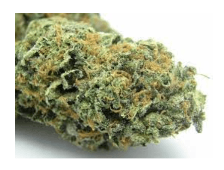 Sunset Sherbet - Cannabis Strain