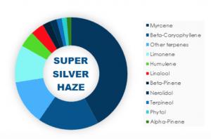 Super Silver Haze Cannabis Strain Details